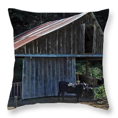 Scenic Tours Throw Pillow featuring the photograph My Yard by Skip Willits
