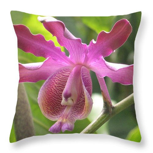 Mymecoplaila Ribicinis Throw Pillow featuring the photograph Myrmecophila Orchid by Alfred Ng