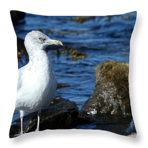 Fall Throw Pillow featuring the photograph Mystic Seagull by Sabrina L Ryan