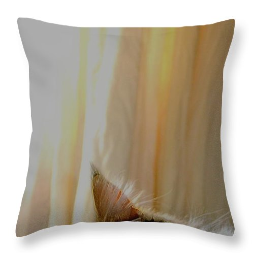 Cat Throw Pillow featuring the photograph Nap Time by Diane montana Jansson
