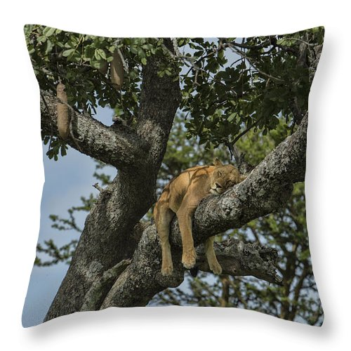 Africa Throw Pillow featuring the photograph Nap Time On The Serengeti by Sandra Bronstein