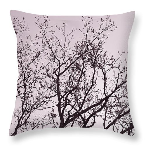 Pecan_tree Throw Pillow featuring the photograph Native Texas Pecan Silhouette by Connie Fox