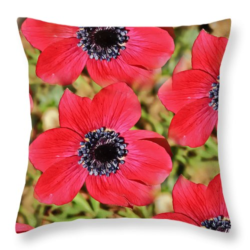 Landscape Throw Pillow featuring the photograph Natural Geometry by Elvis Vaughn