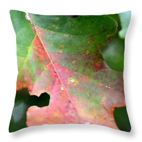 Natural Oak Leaf Abstract Throw Pillow featuring the photograph Natural Oak Leaf Abstract by Maria Urso