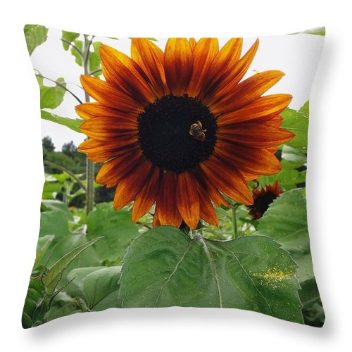Sun Flower Throw Pillow featuring the photograph Natural Splender by Gerald Strine