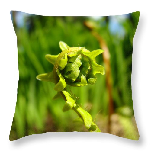 Fern Throw Pillow featuring the photograph Nature Green Fern Frond Unfolding Art Prints Ferns by Baslee Troutman