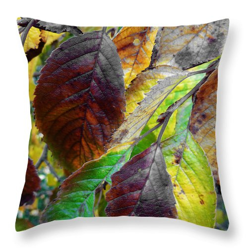 Faded Throw Pillow featuring the photograph Nature Has Been Recycling For Ages by Steve Taylor