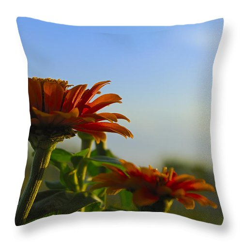 Wildflower Throw Pillow featuring the photograph Natures Beauty by Charles Beeler