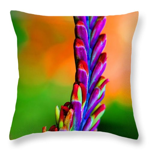 Flowers Throw Pillow featuring the photograph Nature's Colors by Tap On Photo