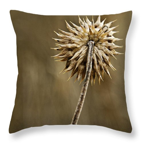 Fall Foliage Throw Pillow featuring the photograph Natures Starburst by Scott Moss