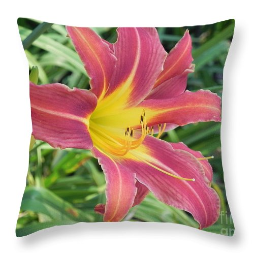Photography Throw Pillow featuring the photograph Natures Way Of Blending Color by Chrisann Ellis