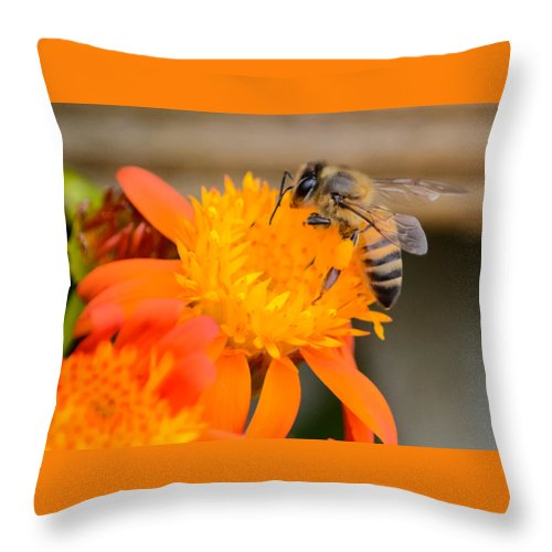Bee Throw Pillow featuring the photograph Carrying A Load by Debra Martz