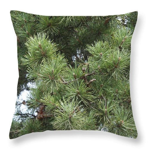 Nature Throw Pillow featuring the photograph Needles by Evgeny Pisarev
