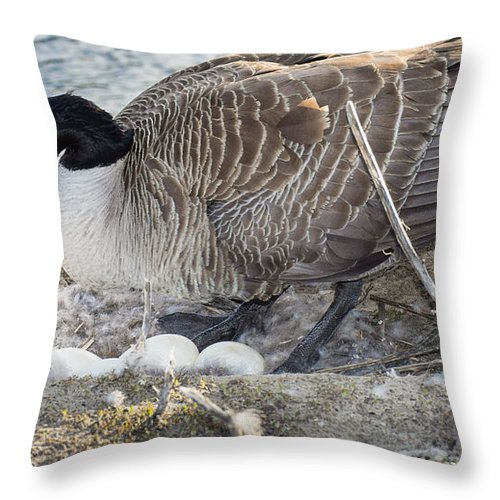 Bill Pevlor Throw Pillow featuring the photograph Nester by Bill Pevlor