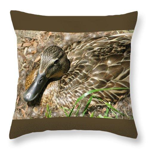 Mallard Throw Pillow featuring the photograph Nesting Mallard by Ann Horn
