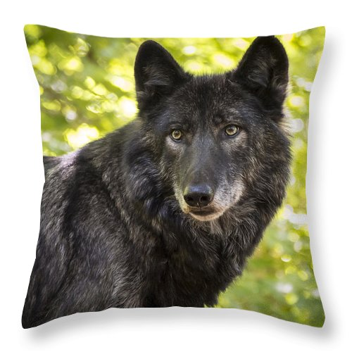 Animals Throw Pillow featuring the photograph NETAR in Spring by Jay Huron