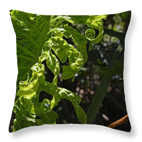 Philodendron Throw Pillow featuring the photograph New Leaf by Roy Thoman
