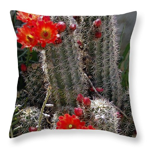 Cactus Throw Pillow featuring the photograph New Mexico Cactus by Kurt Van Wagner