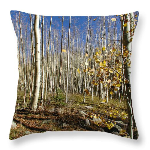 Landscape Throw Pillow featuring the photograph New Mexico Series - Bare Autumn by Kathleen Grace
