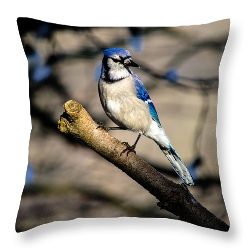 Birds Throw Pillow featuring the photograph Nice Blue Jay Posing by Raymond J Deuso