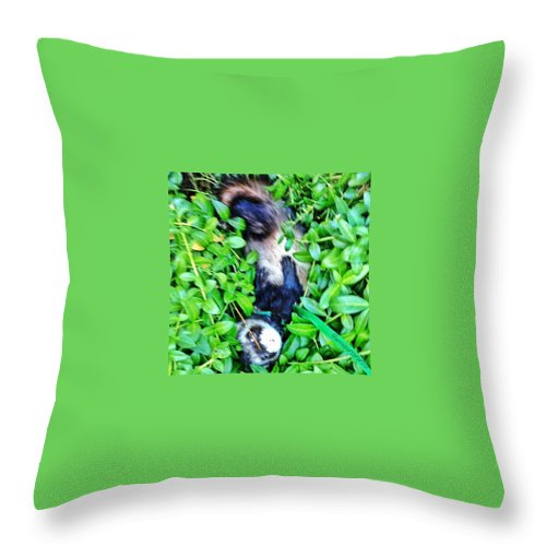 Ferrets Throw Pillow featuring the photograph Nicky Ferret On A Garden Walk by Anna Porter