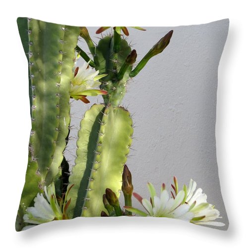 Cactus Throw Pillow featuring the photograph Night-blooming Cereus by Zina Stromberg