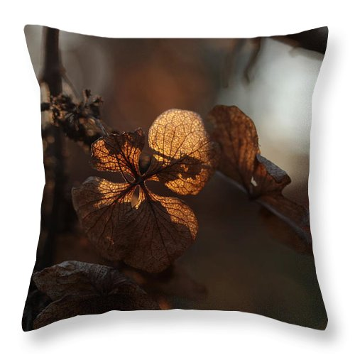 Hydrangea Throw Pillow featuring the photograph Night Lights by Connie Handscomb