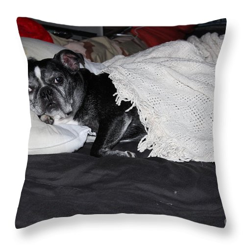 Boston Terrier Canvas Prints Throw Pillow featuring the photograph Night Night Time by R A W M