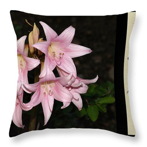 Poetry Throw Pillow featuring the photograph Nighttime Whisper With Poety by Jessica Foster