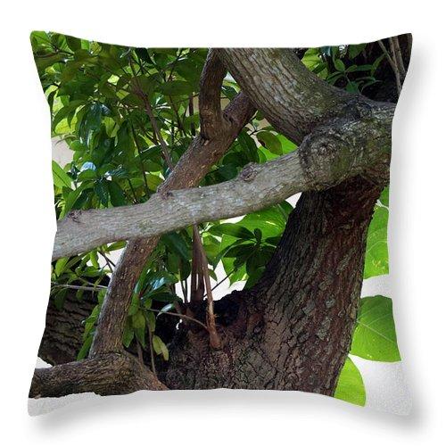Nispero Throw Pillow featuring the photograph Nispero Tree by Rafael Salazar