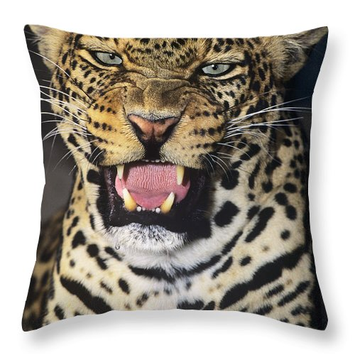 African Leopard Throw Pillow featuring the photograph No Solicitors African Leopard Endangered Species Wildlife Rescue by Dave Welling