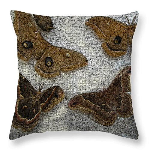 Polyphemus Female Throw Pillow featuring the photograph North American Large Moth Collection by Conni Schaftenaar