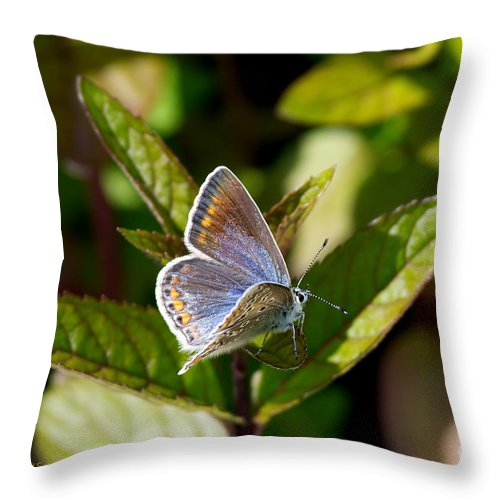 Northern Blue Throw Pillow featuring the photograph Northern Blue by Torbjorn Swenelius