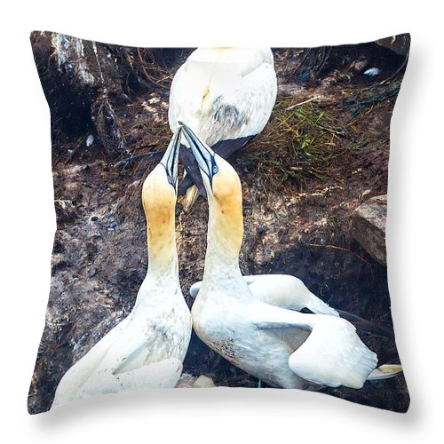 Northern Gannet Throw Pillow featuring the photograph Northern Gannet by Perla Copernik