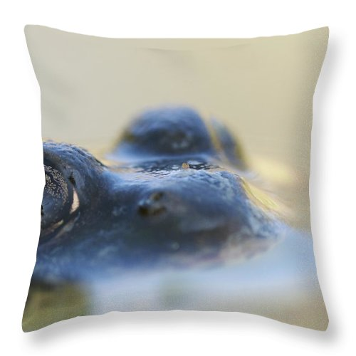 Outdoors Throw Pillow featuring the photograph Northern Green Frog Peeking Out Of by Steeve Marcoux