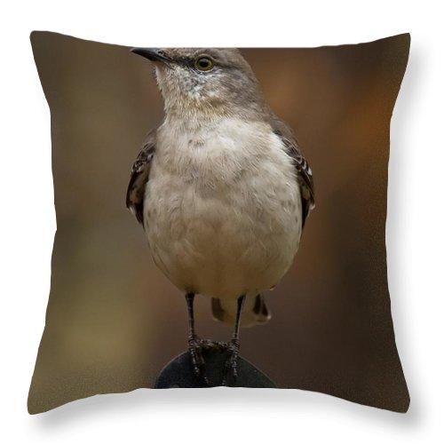 Northern Mockingbird Throw Pillow featuring the photograph Northern Mockingbird by Robert L Jackson