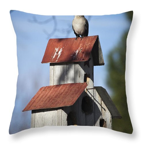 Northern Mockingbird Throw Pillow featuring the photograph Northern Mockingbird by Teresa Mucha