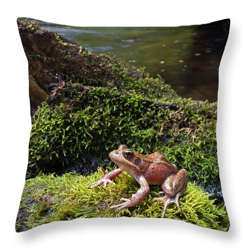 Northern Red-legged Frog Throw Pillow featuring the photograph Northern Red-legged Frog by Stuart Wilson