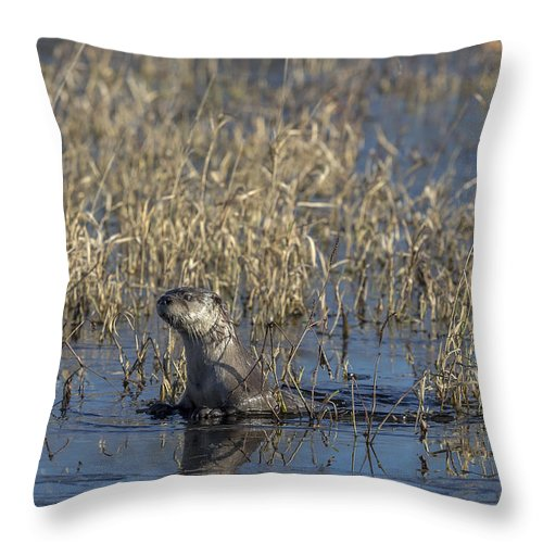 Animal Throw Pillow featuring the photograph Northern River Otter In Wisconsin by Linda Arndt