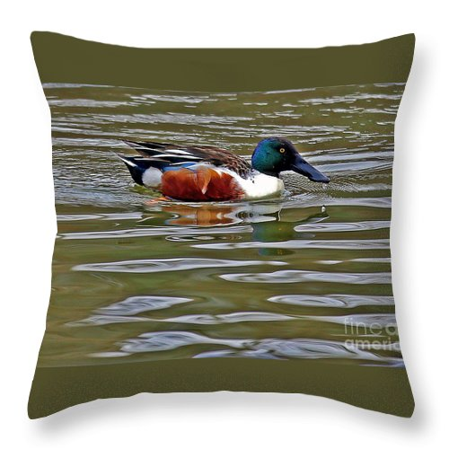Northern Shoveler Throw Pillow featuring the photograph Northern Shoveler by Elizabeth Winter