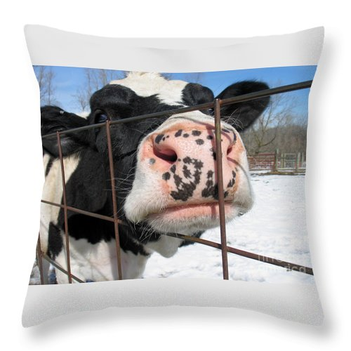 Cow Throw Pillow featuring the photograph Nosy by Ann Horn