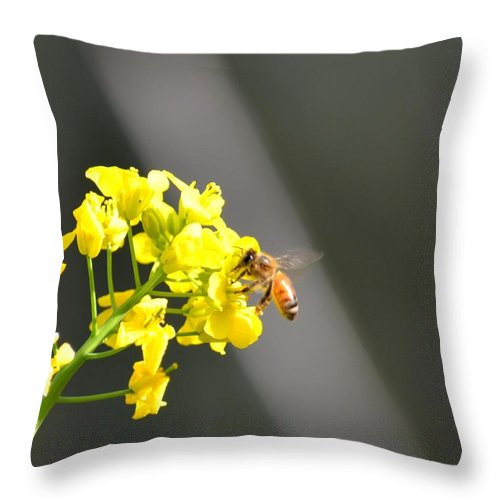 Nourished By Nature Throw Pillow featuring the photograph Nourished By Nature by Maria Urso