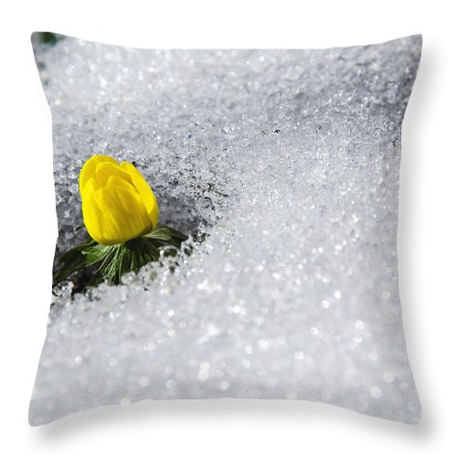 Aconite Throw Pillow featuring the photograph Number One by Kennerth and Birgitta Kullman