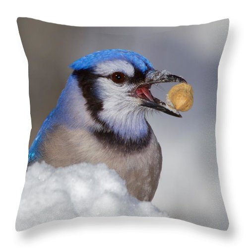 Bird Throw Pillow featuring the photograph Nuts To This Winter by John Absher