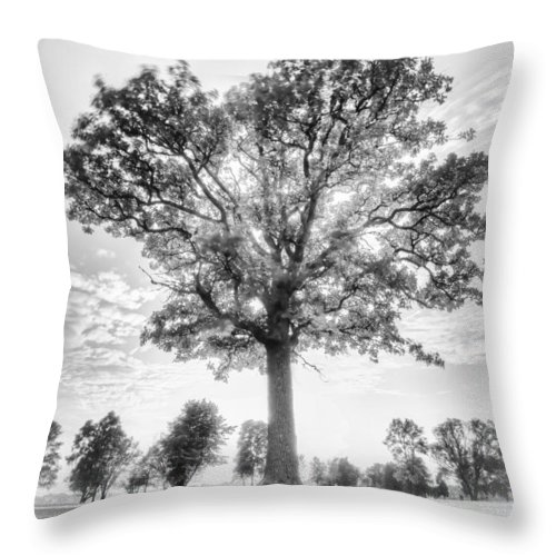 Blue Hour Throw Pillow featuring the photograph Oak Tree Bw by Jakub Sisak