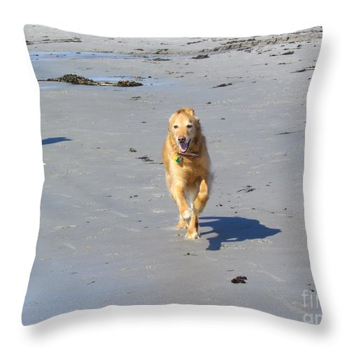 Golden Retriever Throw Pillow featuring the photograph Ocean Run by Elizabeth Dow