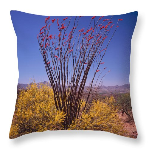 Arizona Throw Pillow featuring the photograph Ocotillo And Palo Verde by Tom Daniel