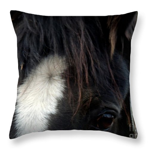 Horse Throw Pillow featuring the photograph Oglala by Rabiah Seminole