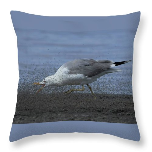 Great Salt Lake Throw Pillow featuring the photograph Oh Boy My Favorite Lunch by Michael J Samuels