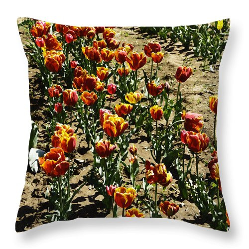 Canon Throw Pillow featuring the digital art Oil Painting - Red And Yellow Tulips Inside The Tulip Garden In Srinagar by Ashish Agarwal